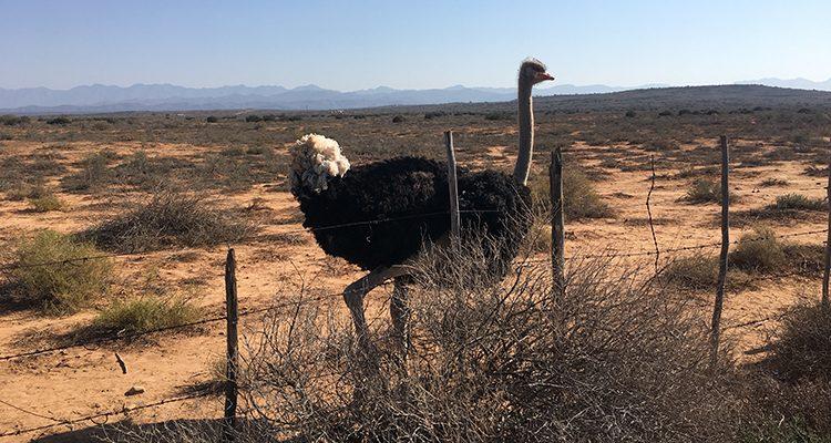 Conoce a Mzwakhe T., entrenador que propone intercambios con Sudáfrica - Avestruz