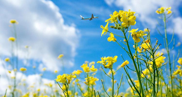 Cómo viajar en avión de manera más sostenible - Vuelo