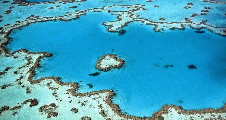 Día Mundial de los Océanos: protégelos viajando de forma sostenible - Corales