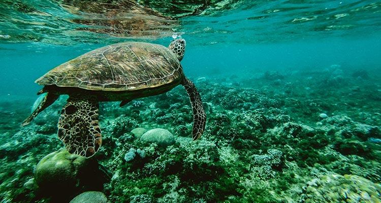 Día Mundial de los Océanos: protégelos viajando de forma sostenible - Tortuga